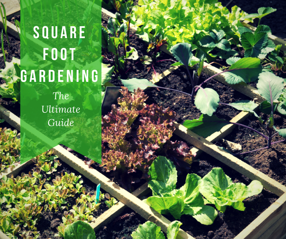 "Square Foot Gardening: The Ultimate ""How To"" Guide"