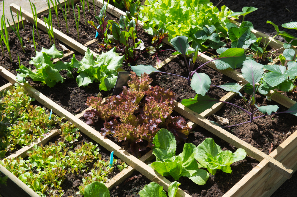 9 Urban Vegetable Garden Ideas To Eat More Healthy At Home - Home-and-gardening-ideas