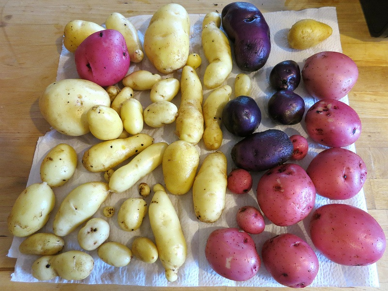 grow potatoes indoors