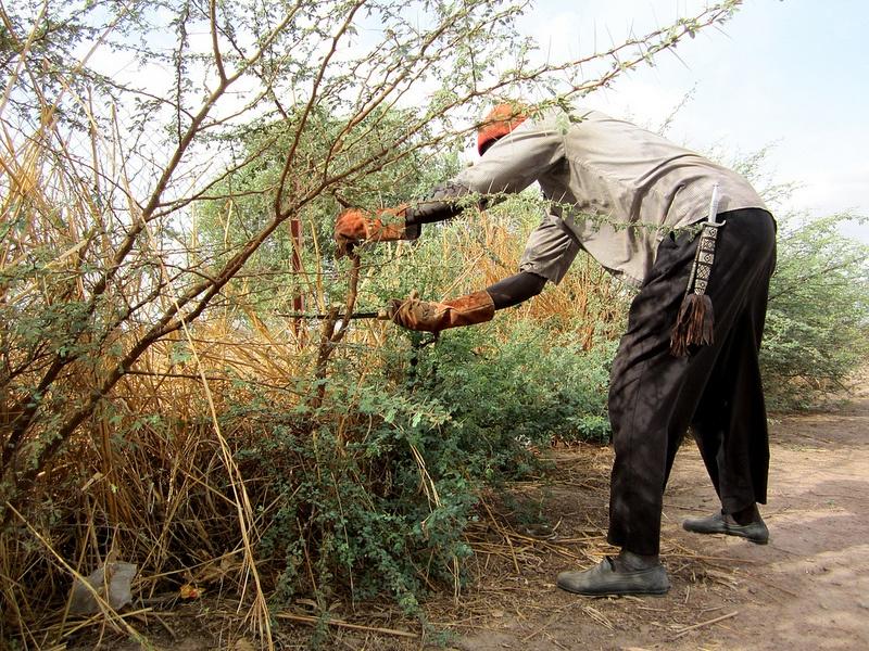 best pruning saws