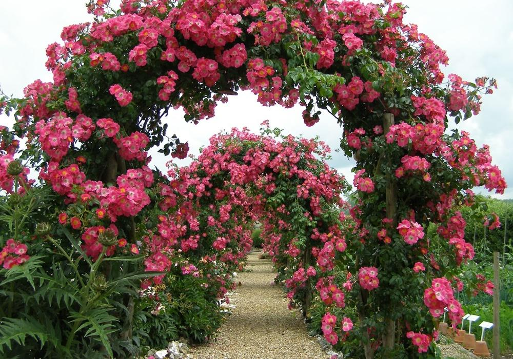 6 Gorgeous Rose Garden Design Ideas | Sproutabl