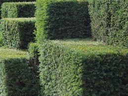 simple garden hedges