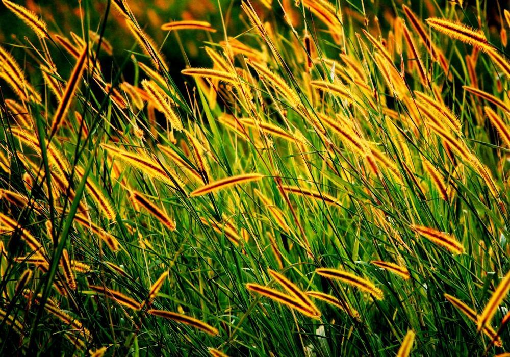 best grass seed brand