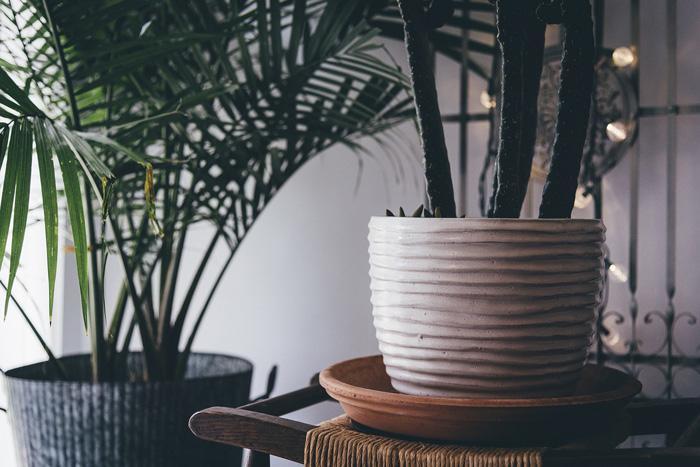 best large indoor plants