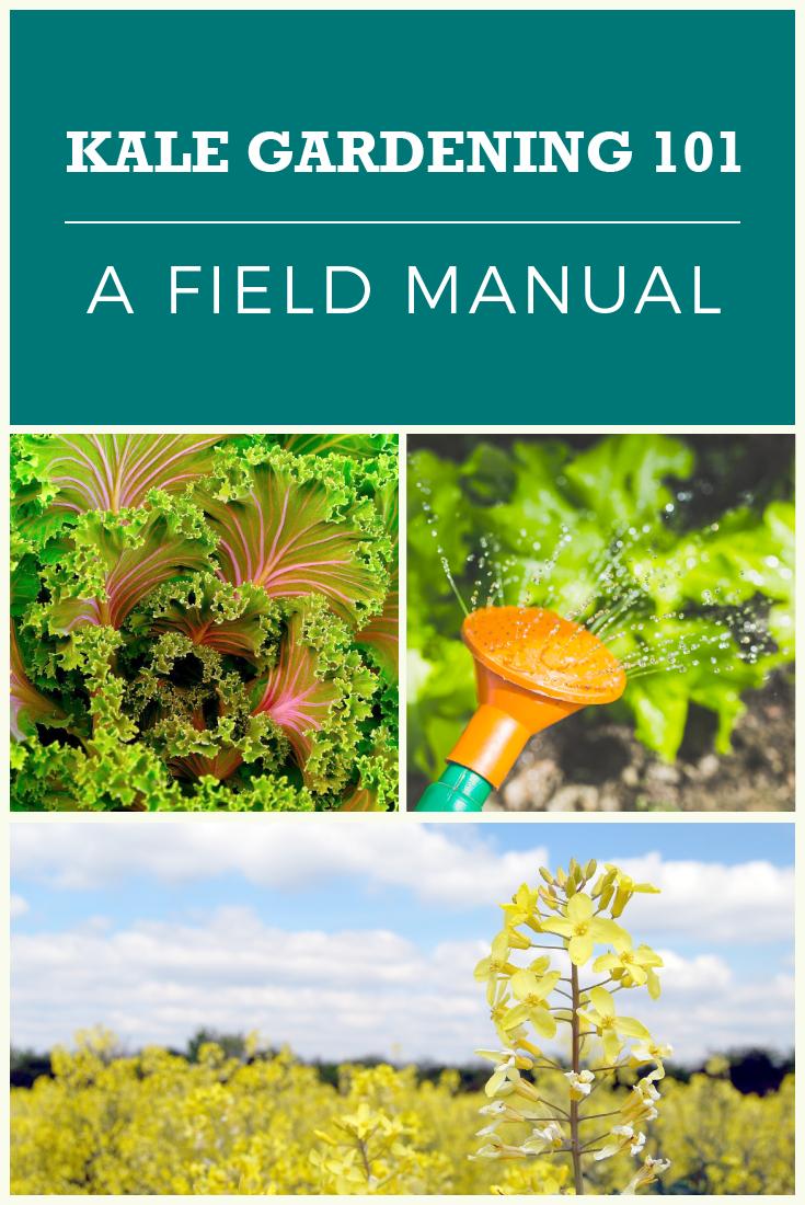 kale plant care tips