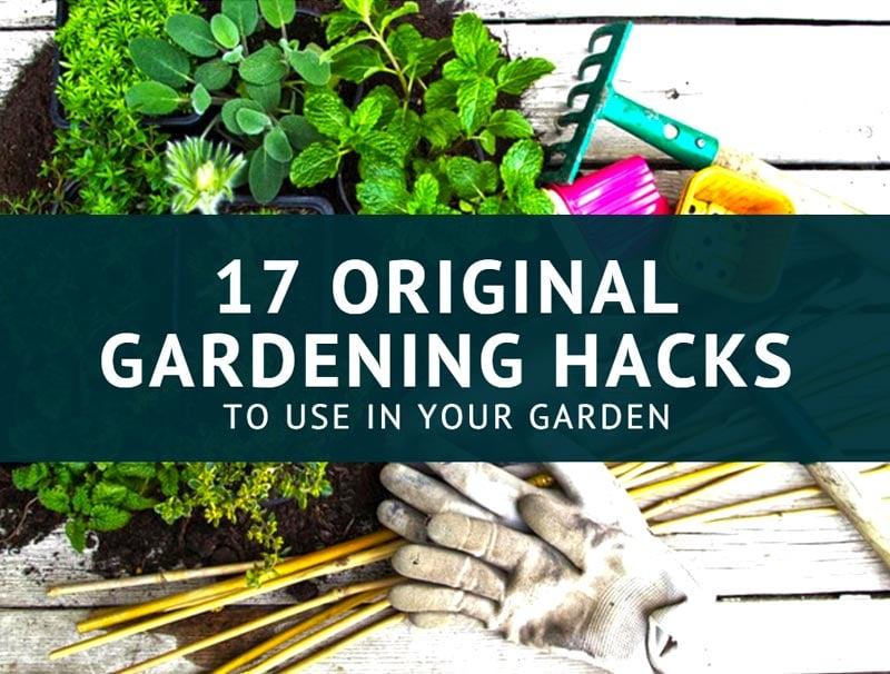 17 Original Gardening Hacks To Use In Your Garden