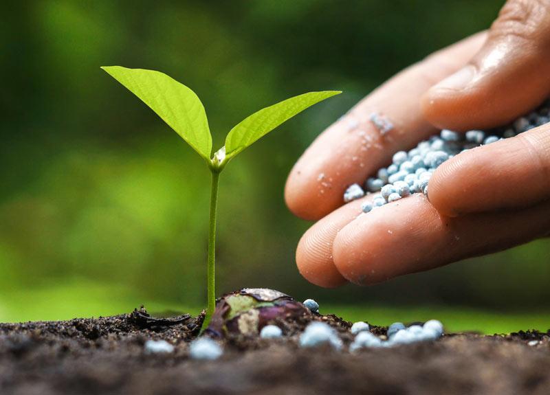 gardening fertilizer