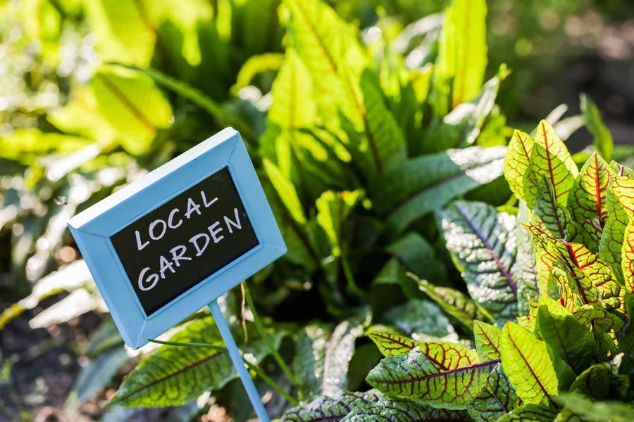 Arts & Crafts Plant Labels