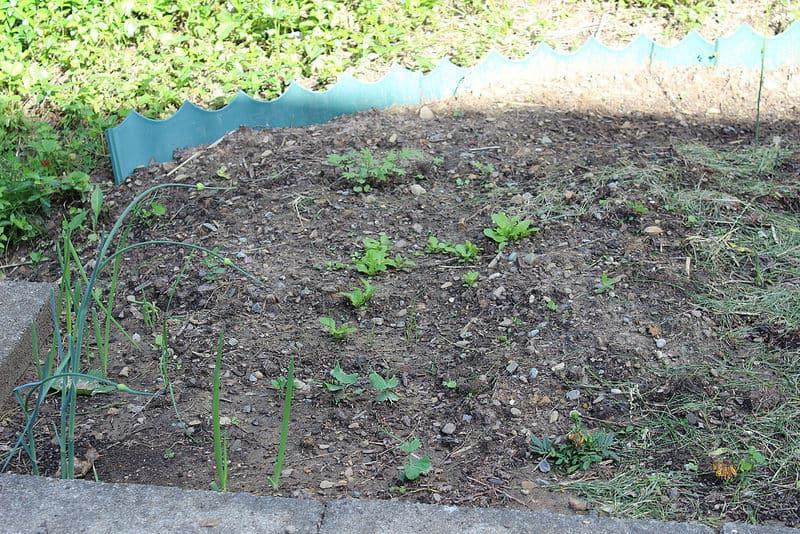 best fertilizer for kale