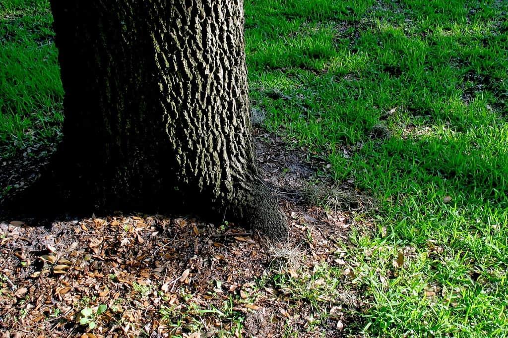 best grass for shade