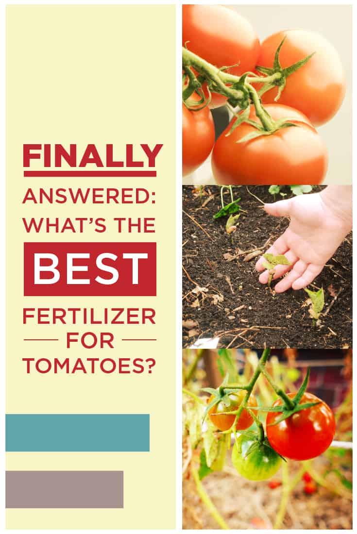 83329 Perrin Carrell Tomato Fertilizer Pinterest Image 051917