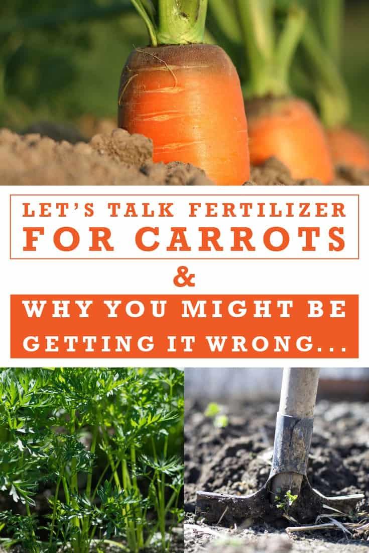 83356 Perrin Carrell Carrot Fertilizer Pinterest Image 052417 1