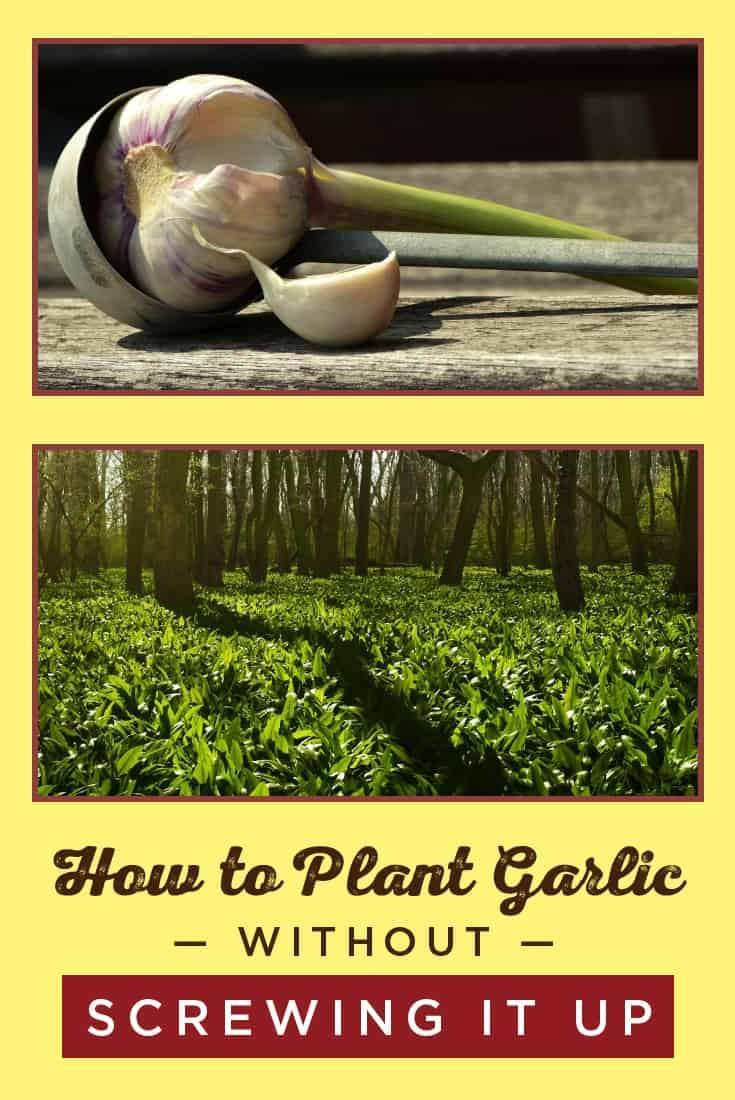 83369 Perrin Carrell Plant Garlic Pinterest Image 060117