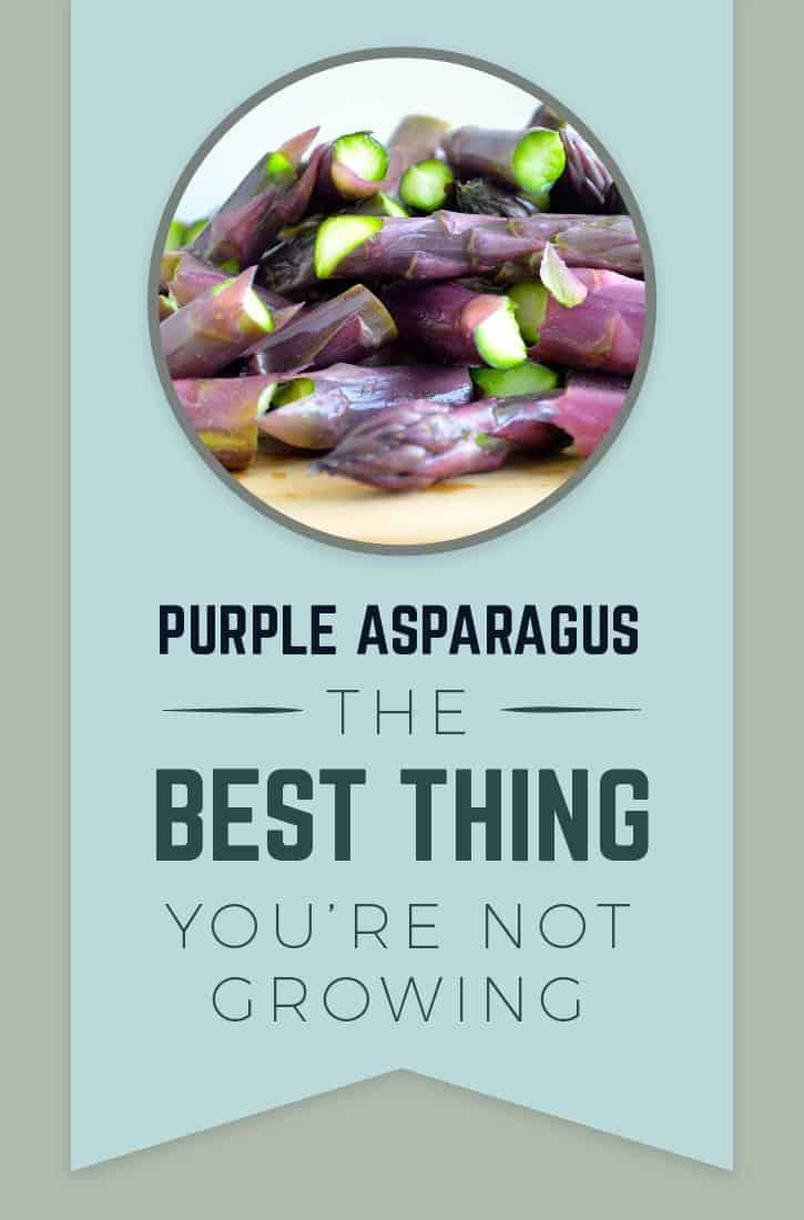 83377 PurpleAsparagus 060717 01