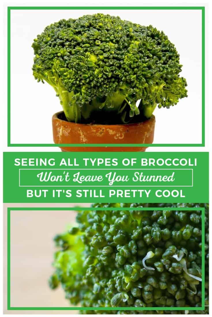 83384 Perrin Carrell Broccoli Types Pinterest Image 060917