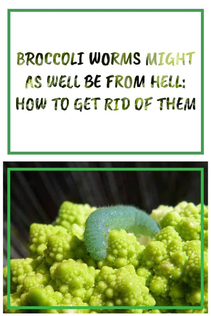 83385 Perrin Carrell Broccoli Worms Pinterest Image 060917