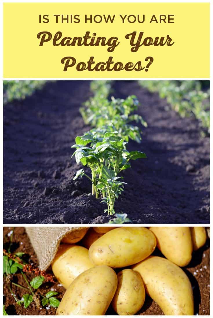 83390 Perrin Carrell Plant Potatoes Pinterest Image 061317