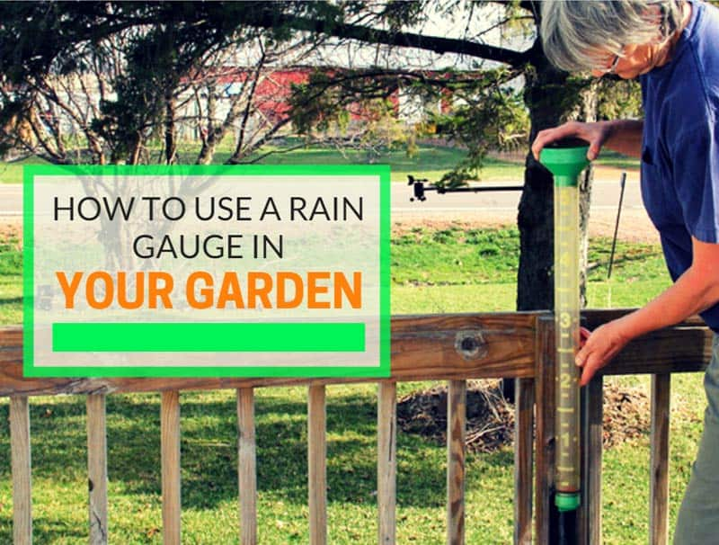 How To Use A Rain Gauge In Your Garden