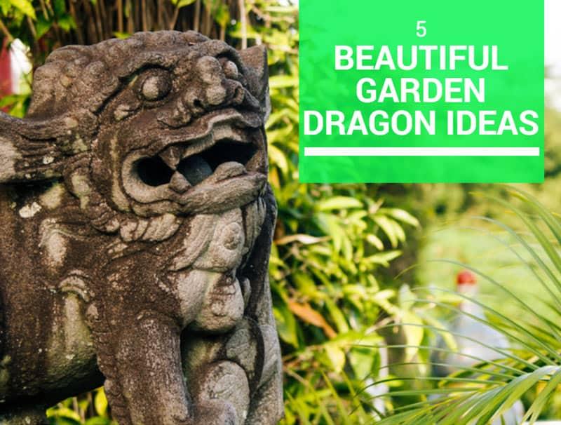best garden dragon reviews