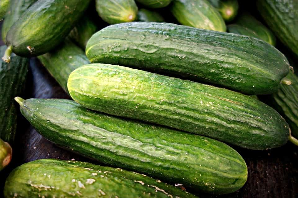 cucumber 1522921 960 720 1 1
