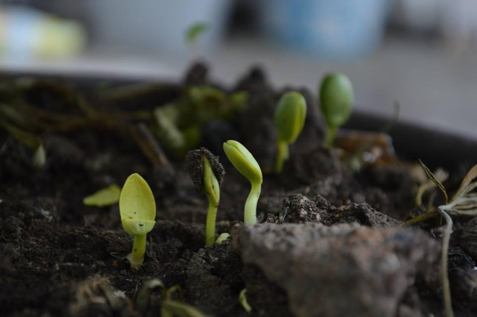 best soil ph testers
