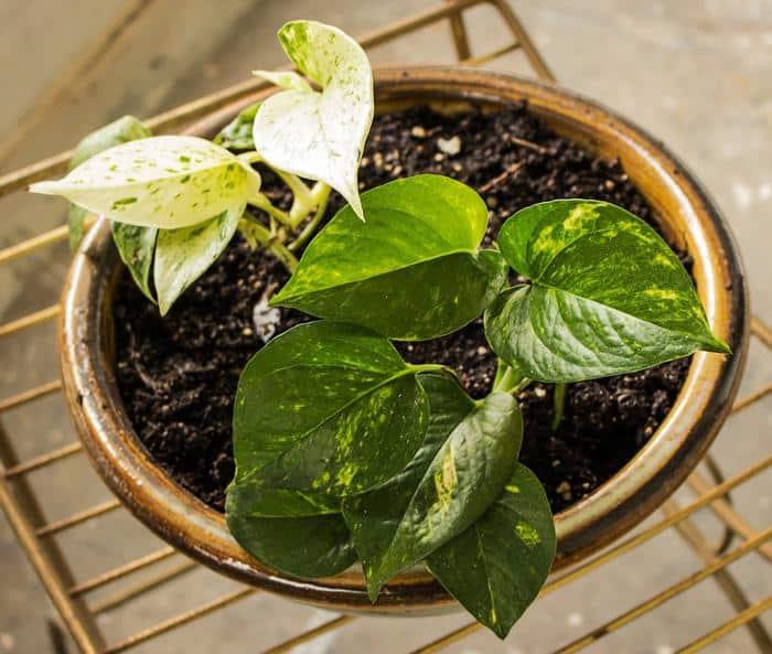 best indoor plants for low light