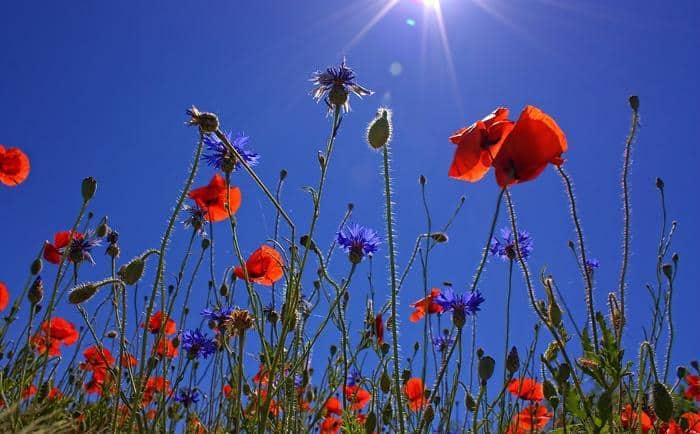best plants for full sun
