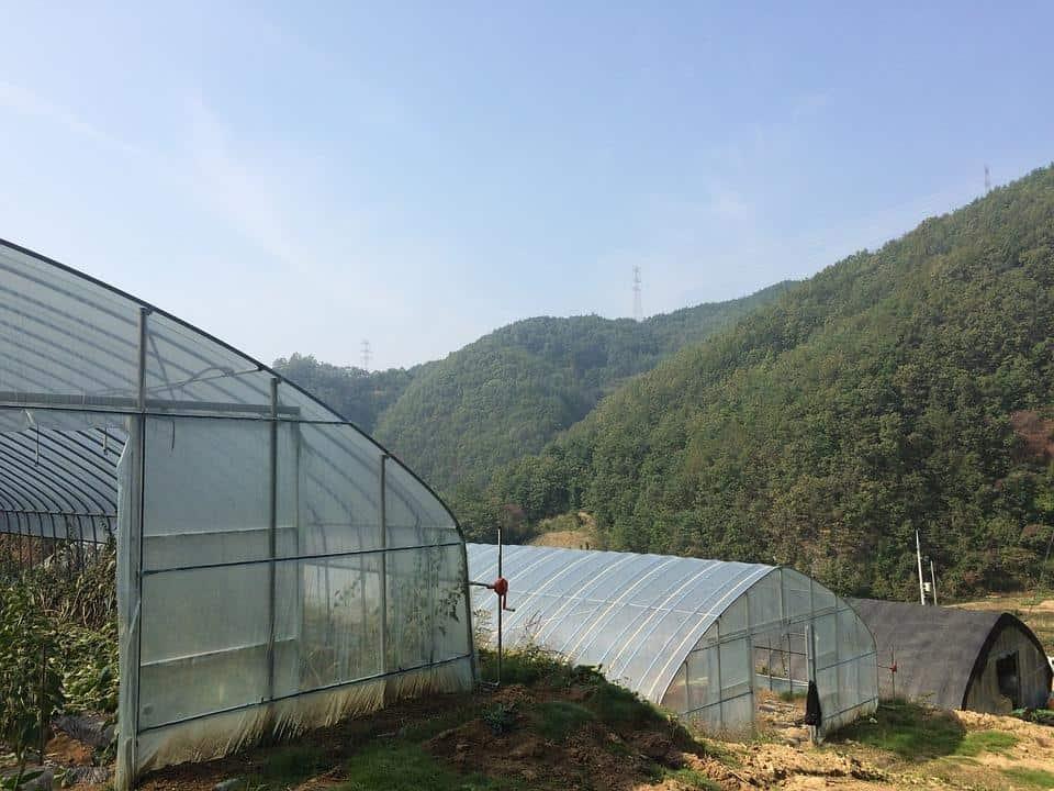 best greenhouse plastic