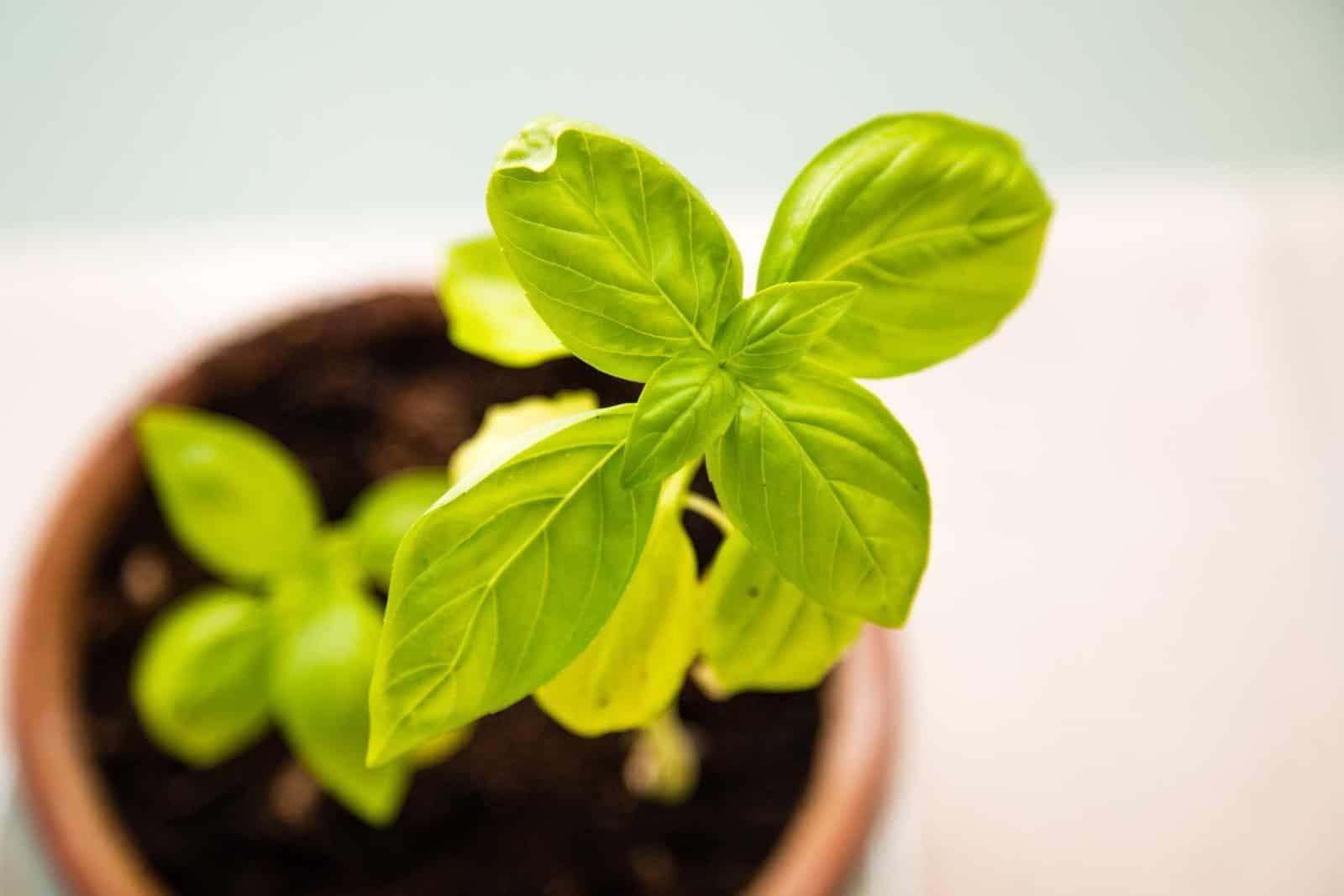 herb container gardening