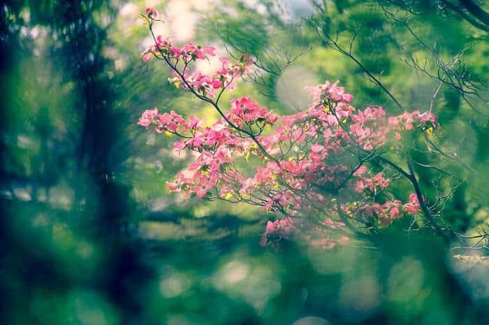 Best Flowering Trees
