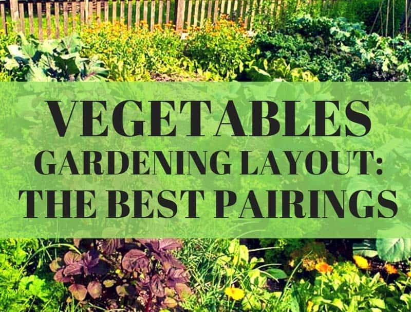 vegetable gardening layout best pairings
