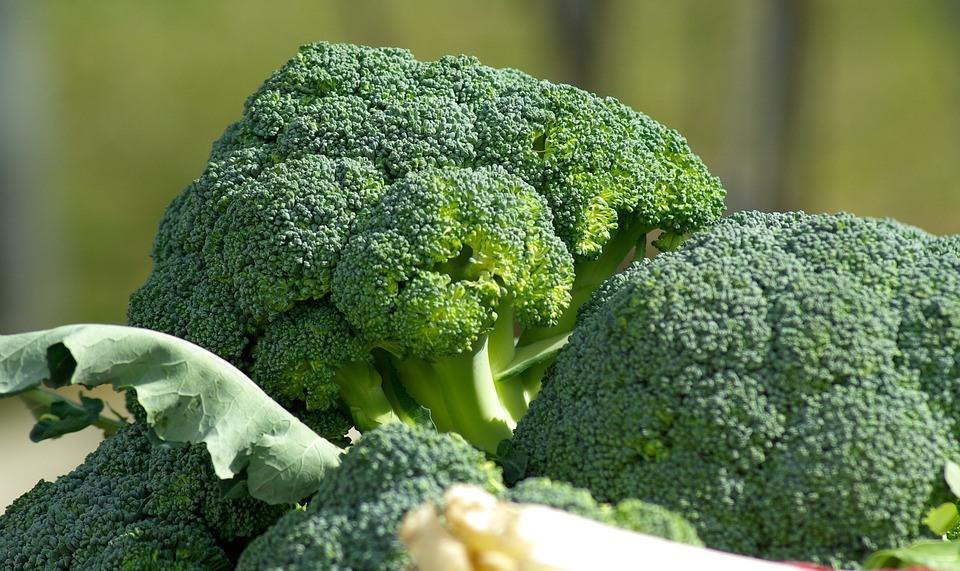 broccoli season