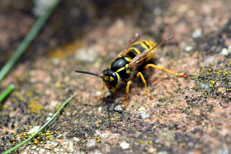 When Should You Hire A Professional for Ground Bee Removal?