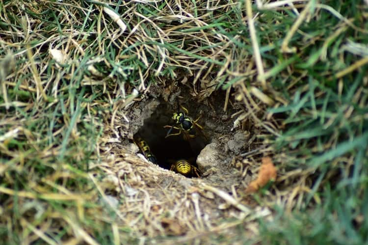 How to Spot An Underground Nest