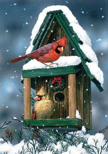 Toland Cardinals In Snow