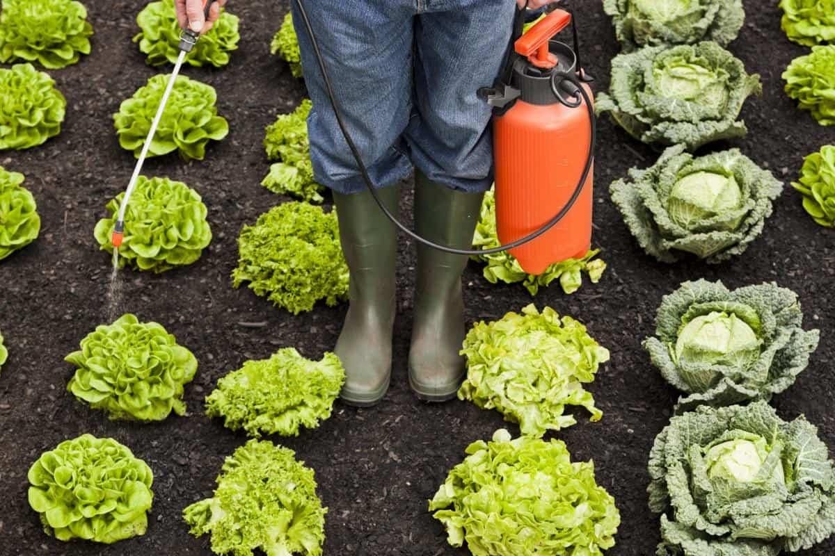 vegetable garden insecticide