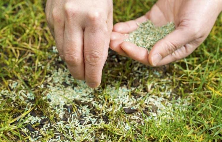 Grass Seeds by Season