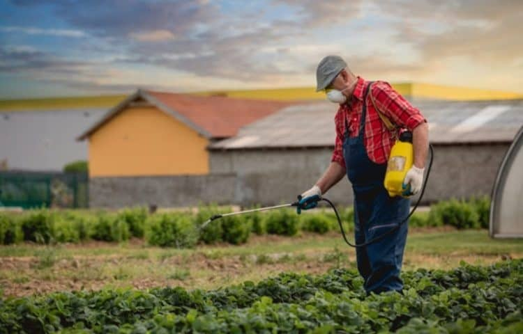 what are common insecticides