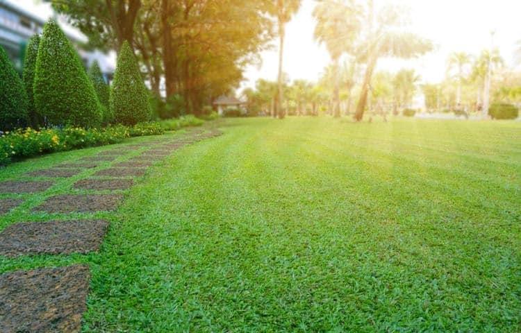 lawn on sun