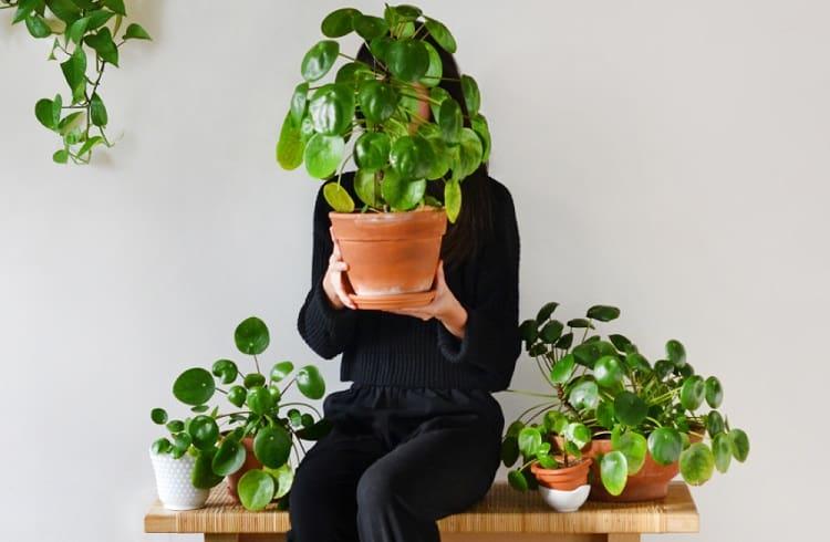 How do you take care of a Pilea plant