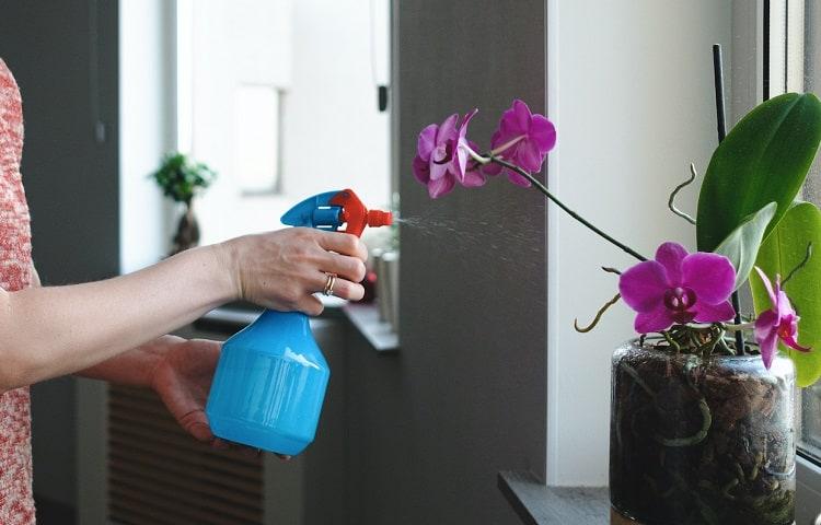 spraying orchid flower