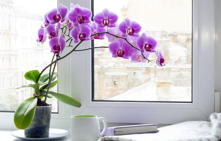 indoor orchid