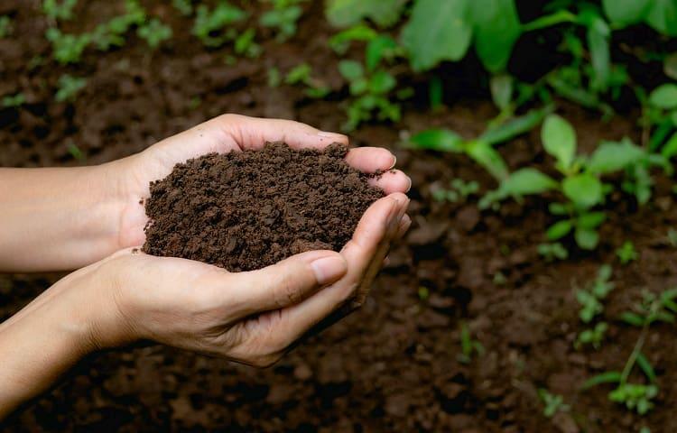 Best Soil For Propagating Aloe